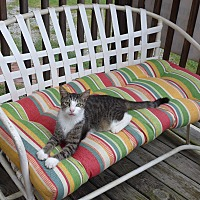 Adopt A Pet :: Petey - Manning, SC