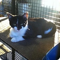 Adopt A Pet :: Swade - Caistor Centre, ON
