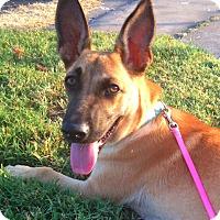 Adopt A Pet :: Roo - Austin, TX