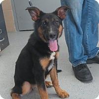 Adopt A Pet :: Hilda - Westport, CT