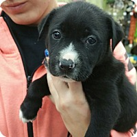 Adopt A Pet :: Jack Frost - Ogden, UT