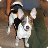 Adopt A Pet :: Violet - Chewelah, WA