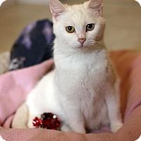 Adopt A Pet :: Nora - Dalton, GA