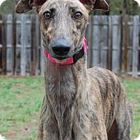 Adopt A Pet :: Yahoo - Cherry Hill, NJ