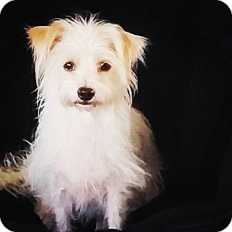 Terrier (Unknown Type, Small)/Terrier (Unknown Type, Small) Mix Dog for adoption in Los Angeles, California - Lily