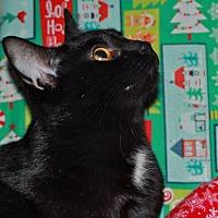 Adopt A Pet :: Kelly - Laingsburg, MI