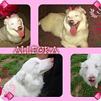 Adopt A Pet :: Allegra - Longview, TX