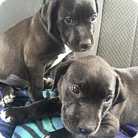 Adopt A Pet :: Milly   and Molly - MIAMI, FL