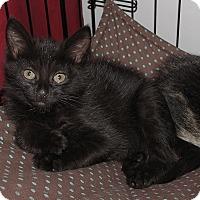 Adopt A Pet :: Tatia - Gainesville, VA