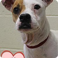 Adopt A Pet :: 341326 FiFi - San Antonio, TX