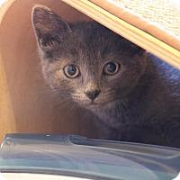 Adopt A Pet :: Skye - Rochester Hills, MI