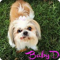 Adopt A Pet :: BABYDOLL - Phoenix, AZ