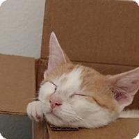 Adopt A Pet :: OB - Leander, TX