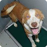 Adopt A Pet :: sean - Midvale, UT