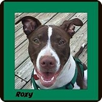 Adopt A Pet :: Roxie - Memphis, TN