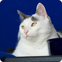 Adopt A Pet :: Jasmine - Coronado, CA