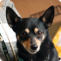 Adopt A Pet :: Henry - Palmdale, CA