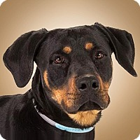 Adopt A Pet :: Spencer - Prescott, AZ
