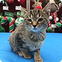 Adopt A Pet :: Duramax - Cincinnati, OH