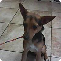 Adopt A Pet :: Gus - Newport, KY