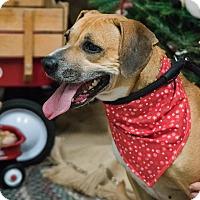 Adopt A Pet :: Daisy - Salisbury, NC