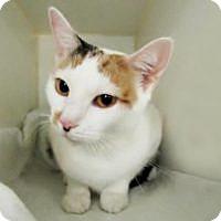 Adopt A Pet :: Snookie - Syracuse area, NY