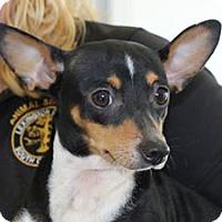 Adopt A Pet :: Abby - Shelburne, VT