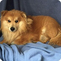 Adopt A Pet :: Oscar - New Kensington, PA