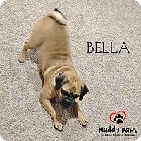 Adopt A Pet :: Bella (Puggle) - Council Bluffs, IA
