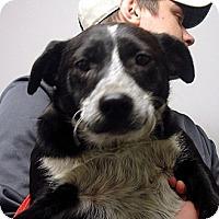 Adopt A Pet :: O'rouke - baltimore, MD
