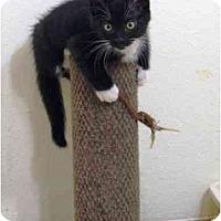 Adopt A Pet :: Emma - Irvine, CA