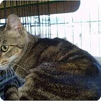 Adopt A Pet :: Honey - San Ramon, CA