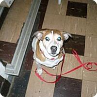 Adopt A Pet :: Tazz - Wisconsin Dells, WI