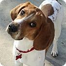Adopt A Pet :: Gadget