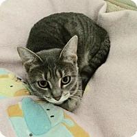 Adopt A Pet :: Maxine - O'Fallon, MO