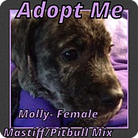 Adopt A Pet :: Molly - Cheney, KS