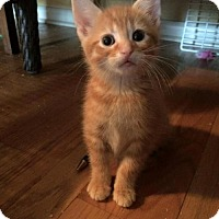 Adopt A Pet :: Dandelion - Hamilton, ON