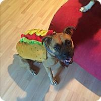 Adopt A Pet :: Keeva - Austin, TX