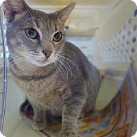 Adopt A Pet :: C-63270 Spring (Petvalu) - Westampton, NJ
