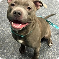 Adopt A Pet :: Rudy - Framingham, MA