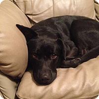 Adopt A Pet :: jack Adoption pending - Manchester, CT