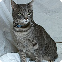 Adopt A Pet :: Professor Underfoot - Sacramento, CA