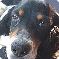 Adopt A Pet :: TALLY - Pine Grove, PA