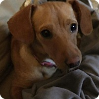Adopt A Pet :: Gracie - Andalusia, PA