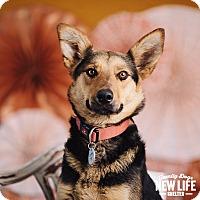 Adopt A Pet :: Mineca - Portland, OR