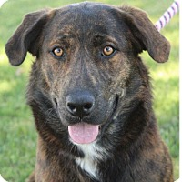 Adopt A Pet :: JUDY - Red Bluff, CA