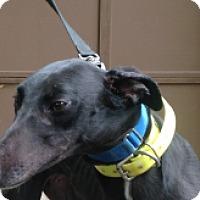 Adopt A Pet :: PJ Katniss - Gerrardstown, WV