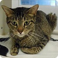 Adopt A Pet :: Sugar - Topeka, KS
