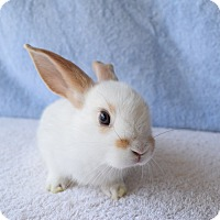Adopt A Pet :: Smarty - Fountain Valley, CA