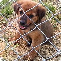 Adopt A Pet :: Avery - Waller, TX